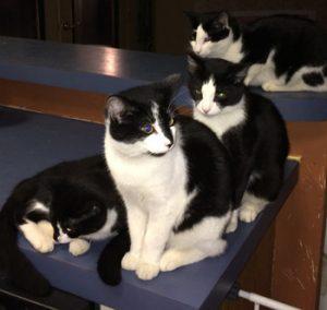 kitties-small